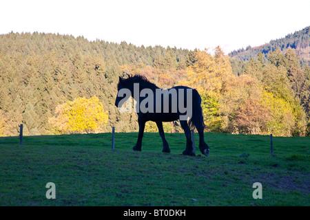 Horse in autumn light - Stockfoto
