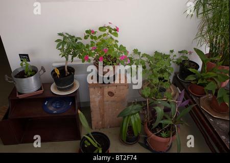 Paris, France, Garden Plants in New Low-income Public Housing Project - Stock Photo