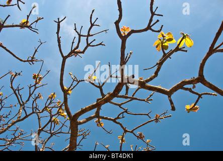 Tree branches in Brazil - Stock Photo