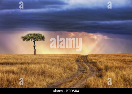 Tracks leading to lone tree on the plains of the Masai Mara National Reserve. Sun rays breaking through storm clouds. - Stock Photo