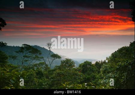 Dawn at Cerro Pirre, in Darien national park, Darien province, Republic of Panama. - Stock Photo