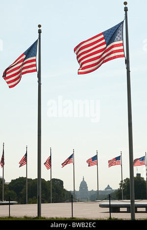 American flags and capitol building, Washington DC, USA - Stock Photo