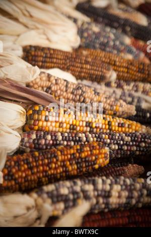 Indian corn still life - Stock Photo
