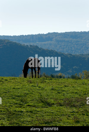 Shenandoah Valley Virginia, The Blue Ridge Mountains in the background with a silhouetted horse and pasture in the - Stockfoto