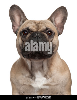 French Bulldog, 2 years old, in front of white background - Stock Photo