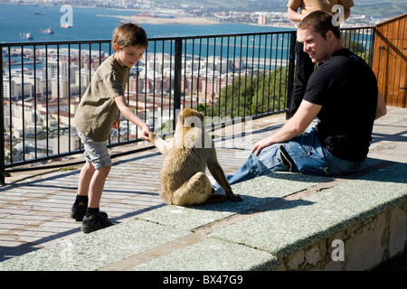 Barbary Macaque monkey sitting with a tourist family in / on Gibraltar Rock and is fed by a boy / child. - Stock Photo