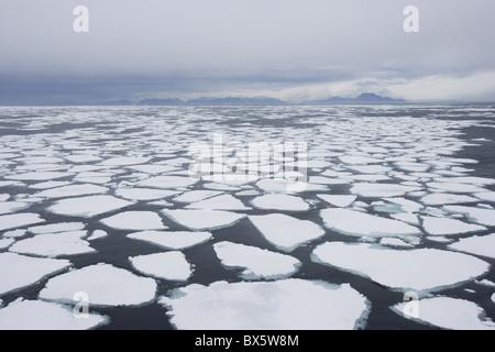 Ice floe, drift ice, Greenland, Arctic, Polar Regions - Stock Photo
