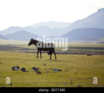 Horse in mongolian mountains - Stockfoto