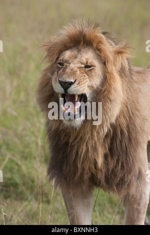 samburu nationalpark, check out samburu nationalpark
