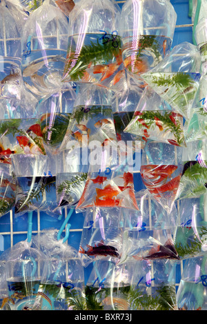 Aquarium pet shop selling goldfish in plastic bags in the for Chinese fish market near me