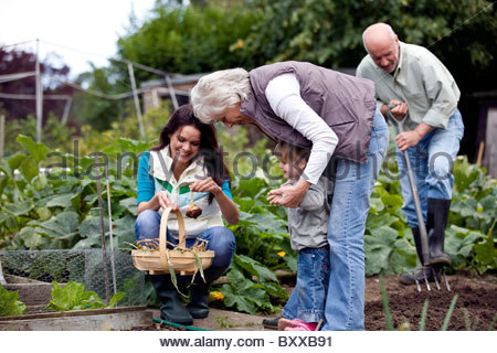 A family working on an allotment together - Stock Photo
