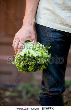 A man holding a lettuce - Stock Photo