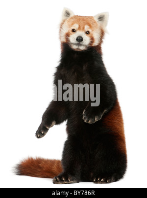 fulgens or shining - photo #31