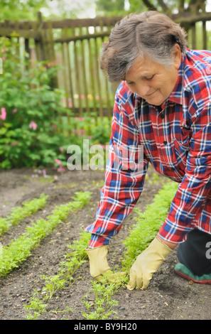 Happy senior woman gardening - weeding carrot - Stock Photo