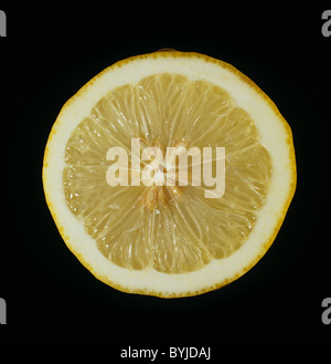 Cut section of a citrus fruit lemon variety Ponderosa - Stock Photo