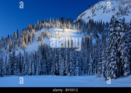 Mount Rainier National Park becomes a winter wonderland in winter, with snow covered trees and trails for snowshoeing - Stock Photo