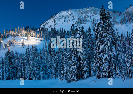Mount Rainier National Park becomes a winter wonderland in winter, with snow covered trees and trails for snowshoeing - Stockfoto