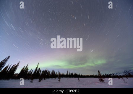 View of Northern Lights and star trails above spruce trees in Broad Pass, Southcentral Alaska, Winter - Stock Photo