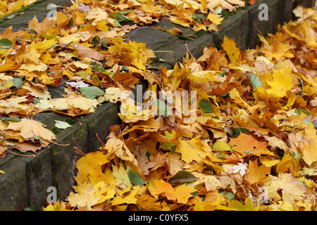 Stairs covered with fallen autumn leaves. - Stock Photo