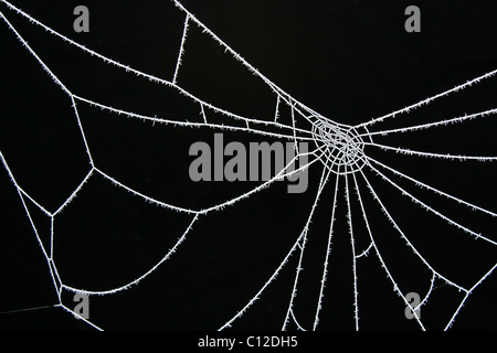 Icy ice cold white frosted spider web against a black background (species?). - Stock Photo