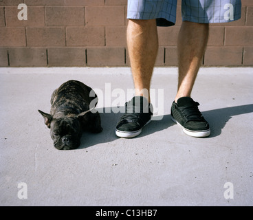 A French bulldog lying at its owner's feet - Stock Photo
