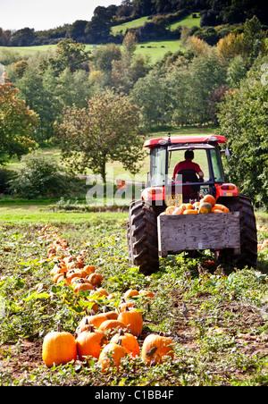 pumpkin farm surrey