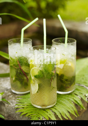 Three mojito cocktails on fern - Stockfoto