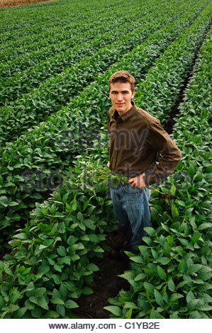 A young farmer in a field of green soybeans in mid-summer in central Iowa. USA. - Stock Photo