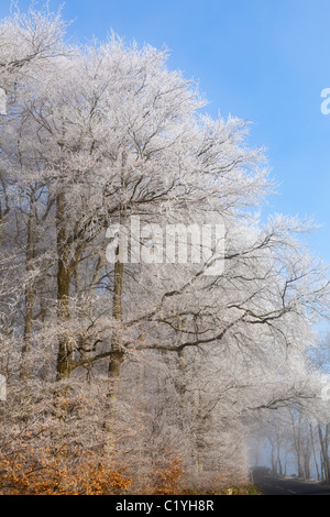 Hoar frost and mist in winter on the lane across Scottsquar Hill in the Cotswolds at Edge, Gloucestershire, England, - Stock Photo