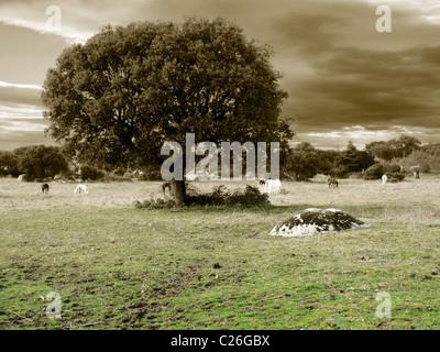 Oak and horses in gray tones - Stockfoto