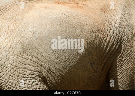 The skin of an African Elephant - Stock Photo