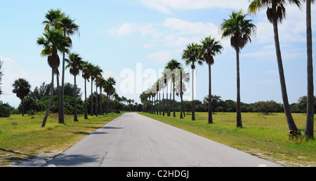 The Palm trees lined up at the side of the road in Central Florida - Stock Photo