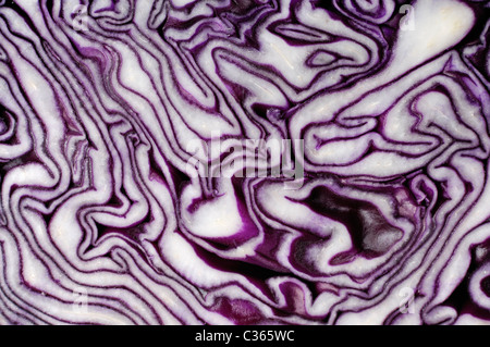 Red cabbage slice close-up Abstract organic texture background Brassica oleracea var. capitata f. rubra - Stock Photo