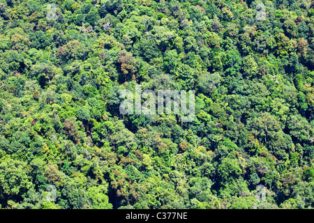 Tropical Rainforest, Malaysia - Stock Photo