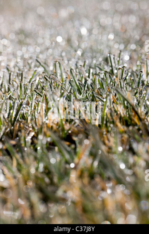 Close-up macro photograph of frost on grass - Stock Photo