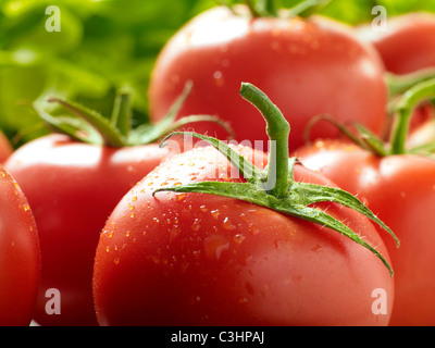 Fresh vine-ripened tomatoes - Stock Photo