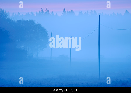 Row of electricity poles on field in morning mist - Stock Photo