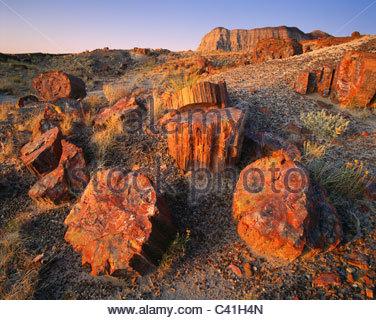 Sunrise on [petrified wood] at 'Long Logs' [Petrified Forest National Park] Arizona - Stock Photo
