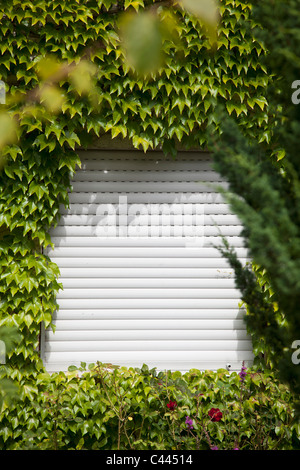 A rolling shutter surrounded by ivy - Stock Photo