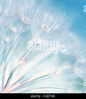 Blue abstract dandelion flower background, extreme closeup with soft focus, beautiful nature details - Stock Photo