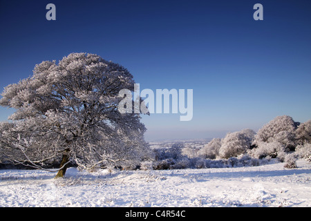 trees covered in snow - Stockfoto