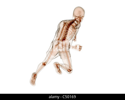 running skeleton - Stock Photo