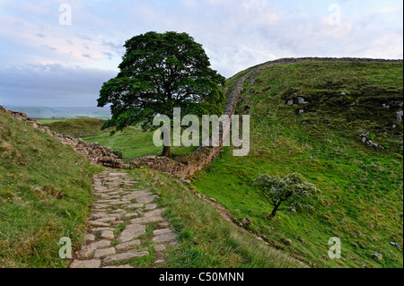 Sycamore Gap on Hadrian's Wall - Stock Photo