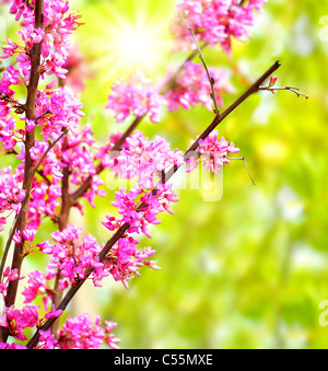 Fresh pink blooming flowers on the tree, spring life in nature - Stock Photo