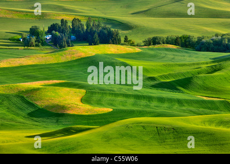 High angle view of green fields, Steptoe Butte, Palouse, Washington State, USA - Stock Photo