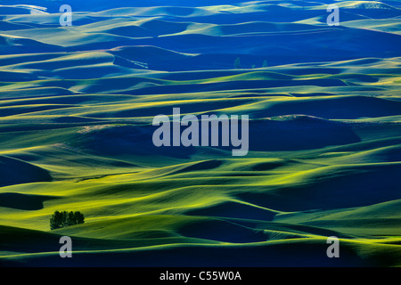 High angle view of green fields, Steptoe Butte, Palouse, Washington State, USA - Stock Photo