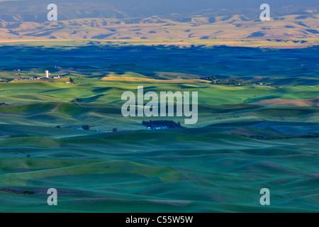 High angle view of green fields, Palouse, Washington State, USA - Stock Photo