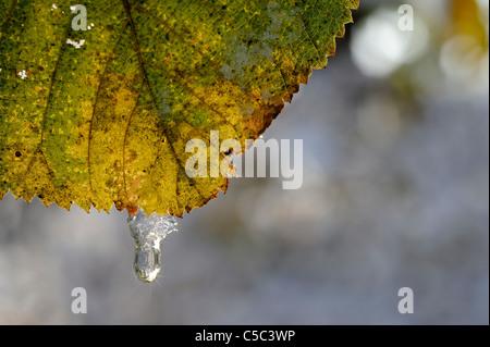 Detail-Aufnahme von Wassertropfen auf einem herbstlichen Blatt vor verschwommenen Hintergrund - Stockfoto