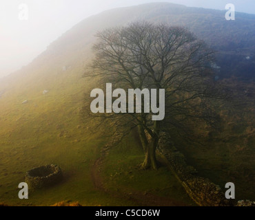 Sycamore Gap And Hadrian's Wall; Northumberland, England - Stock Photo
