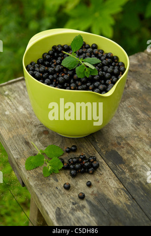 Close-up of black currant berries in green bowl on wooden table - Stock Photo